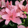 What to look for while Shopping for Wholesale Flowers?