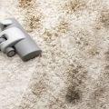 Extreme Clean Carpet