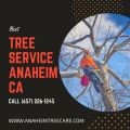 Tree Trimming Orange County