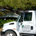 Affordable Palm Service, Inc