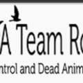 A Team Raccoon Removal Service