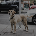 Danville Dog Bite Attorney