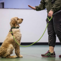 Think smartly when it comes to training your dog