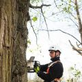 Webster Groves Tree Service