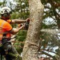 Dubuque Tree Service